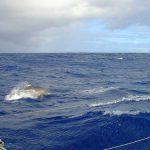 05-caraibi-in-barca-vela-delfini