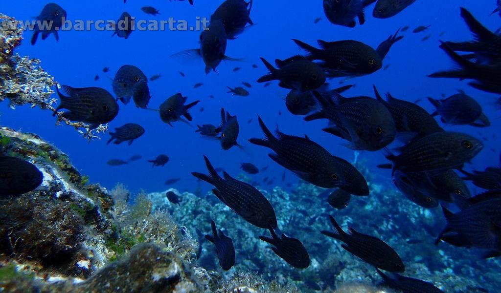 Isole Eolie diving in barca a vela - gruppo di castagnole