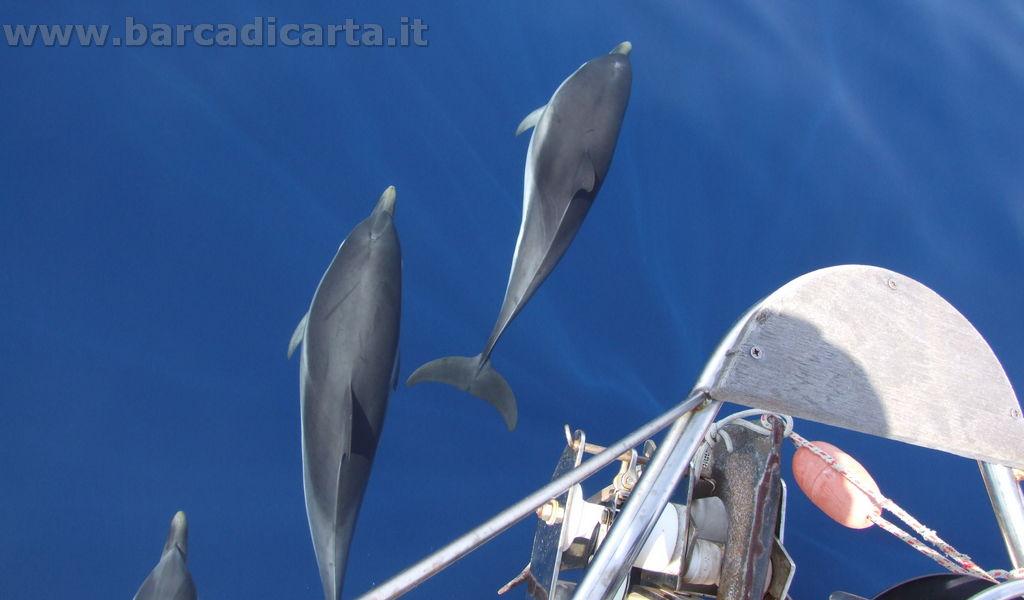 Delfini!