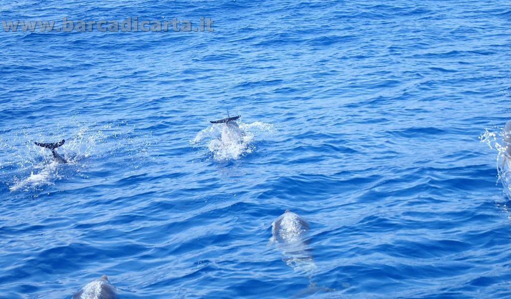 Delfini - non possono mancare in una vacanza in barca