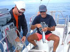 Pesca al tonnetto alla traina, isola di Ponza