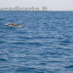 Delfini capitolini a Roma Ostia