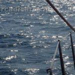 Delfino tursiope vista dalla barca a vela a Roma (Ostia)