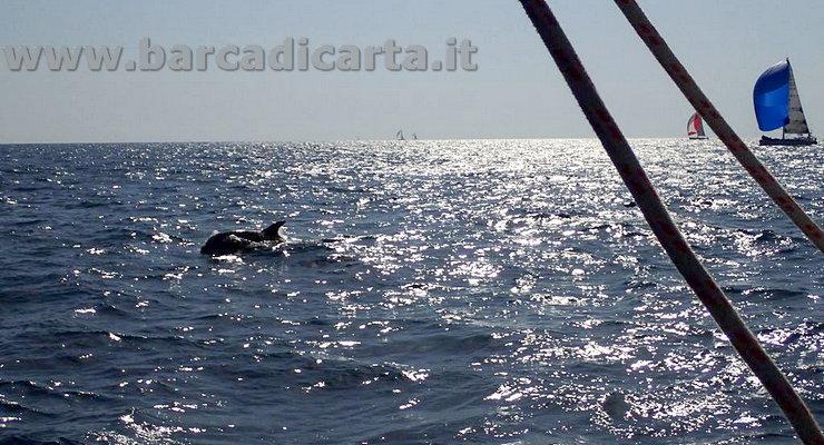 Ostia  incontro con i delfini capitolini